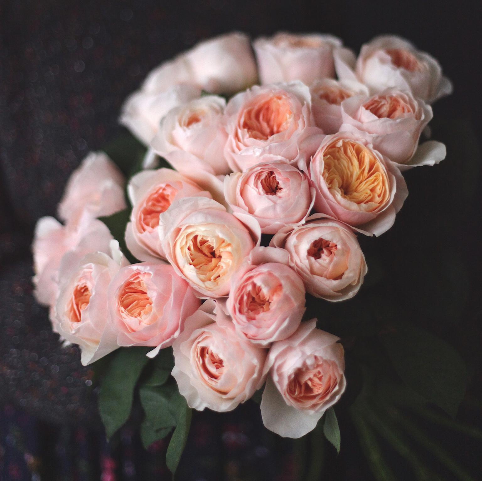 Розы: Значения и символи цвета.